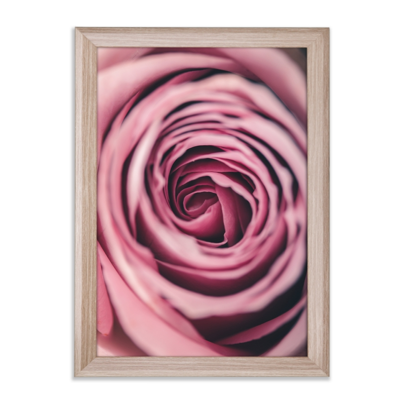 rose rosa 2 als kunstdruck 100x70cm mit bilderrahmen prio. Black Bedroom Furniture Sets. Home Design Ideas